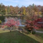 Lake surrounded by red trees