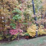 Green, red, and yellow trees